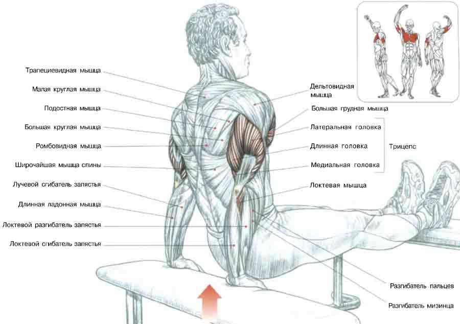Как накачать грудные мышцы в домашних условиях женщине видео