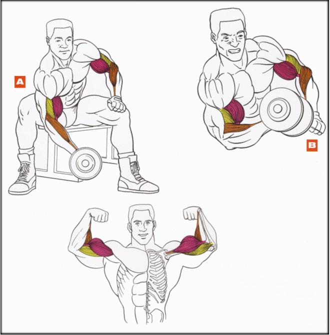 Упражнения для мышц в домашних условиях без гантелей 339